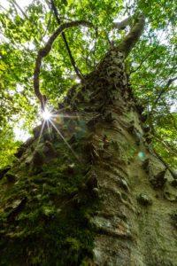 Exotischer Baum Afrika