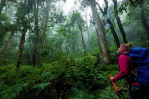 Wald Südafrika Eastern Cape