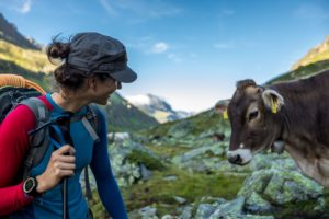 Wandererin Kuh Berge Wandern