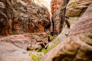 Wanderung durch Canyons im Zion National Park Observation Point