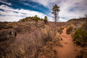 Oberer Teil der Wanderung zum Observation Point im Zion National Park