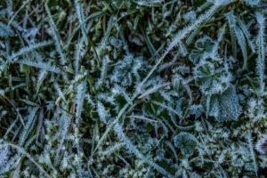 Eiskristalle Gras